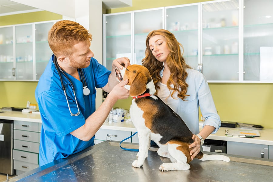 Круглосуточная ветеринарная клиника в городе Шатура Московской области