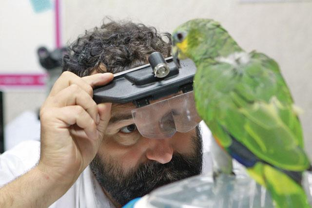 Лечение птиц попугаев, амадинов, карел попугаев, (волнистый попугай), голуби, неразлучники) в Шатура Московской области