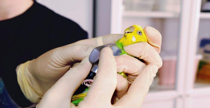 Вызов на дом орнитолога по городу Шатуре и Шатурском району Московской области