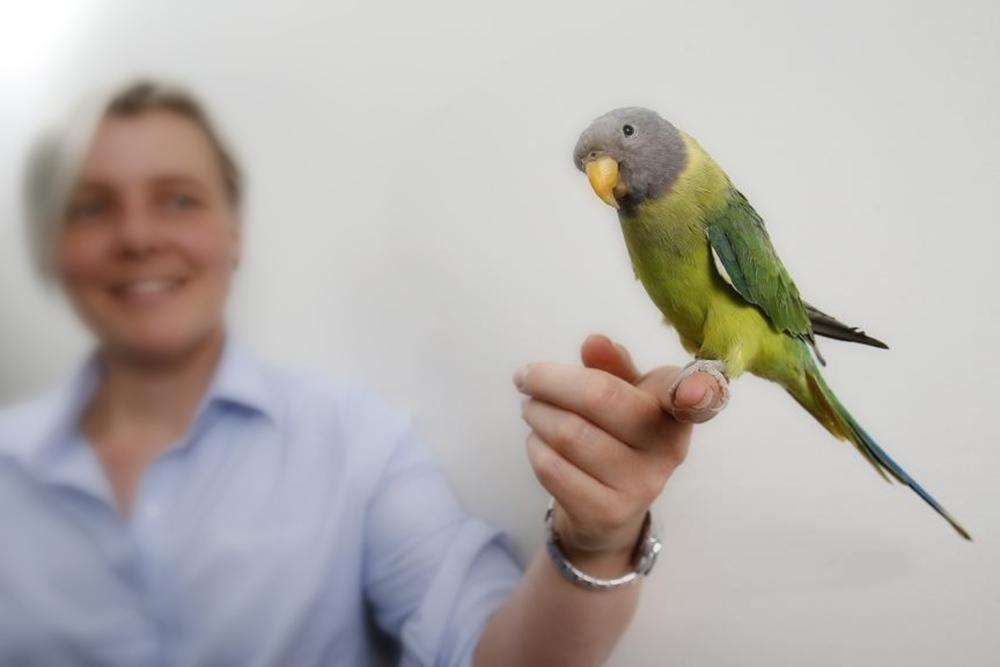 Вызов ветеринара орнитолога в городе Шатура и по району Московской области