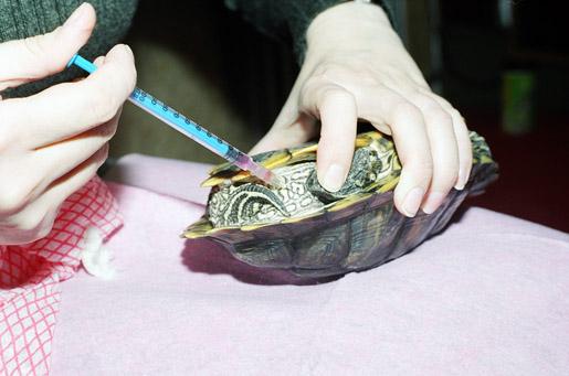 Лечение рептилий в городе Шатура