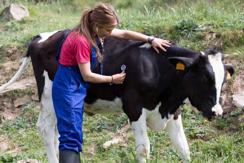 Лечение коз, коров, лошадей, баранов Шатуре и Шатурском районе